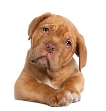 Если собака плохо ест?