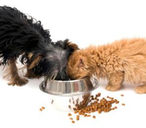 Собаки и кошки разные, как и их потребности в еде