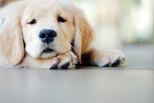 Если у собаки понос